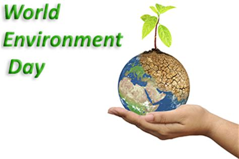 8 Simple Ways to Help the Environment Fastweb